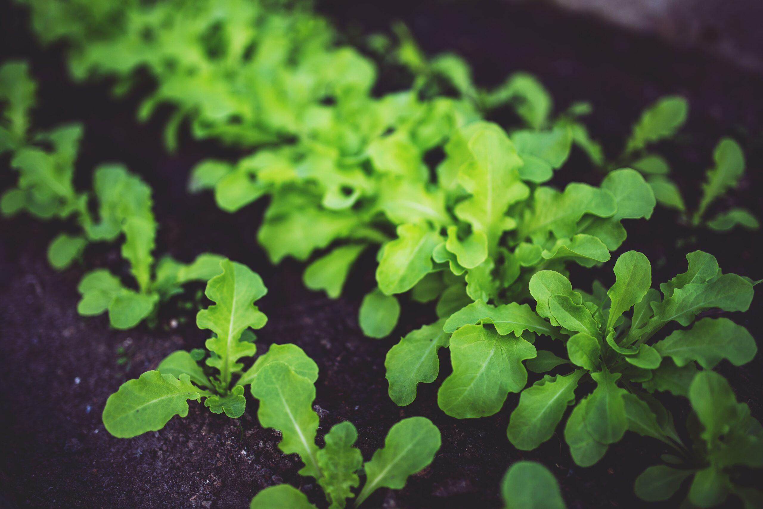 eco pest control - home garden