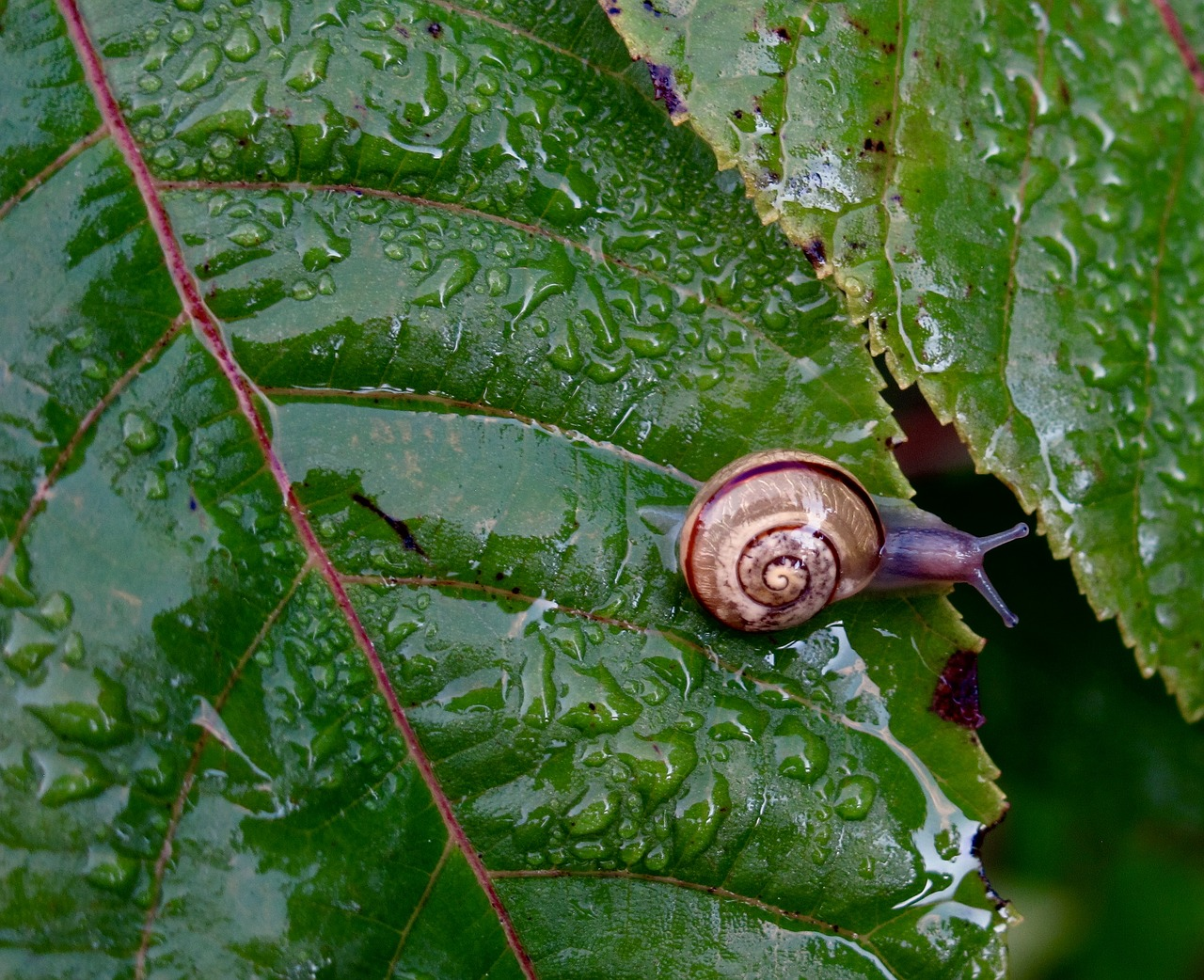 tips to rid of snails and slugs