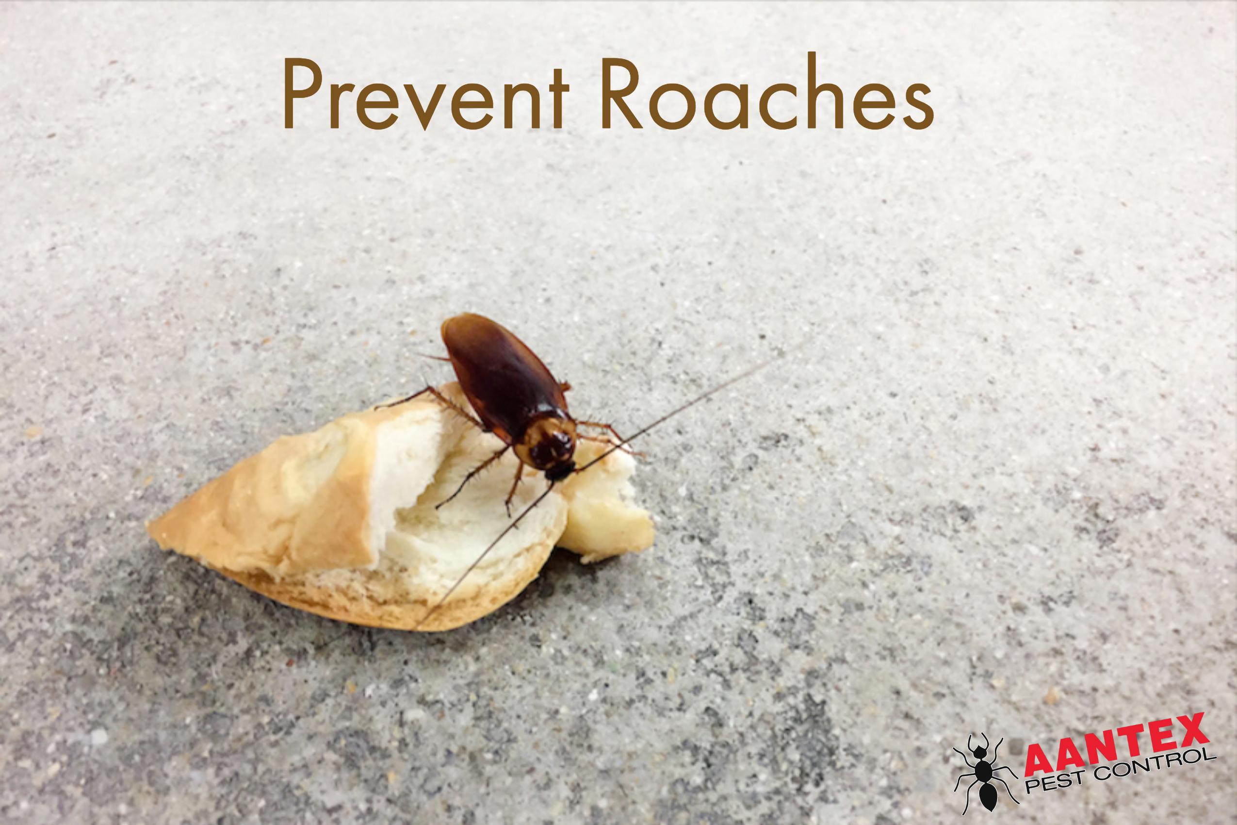 Prevent Roaches - Aantex Pest